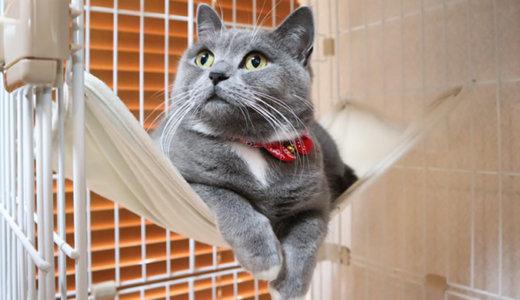 首輪で顔のモフモフ増量計画|猫首輪ハゲは大丈夫?
