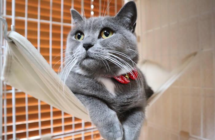 首輪で顔がモフとなる猫