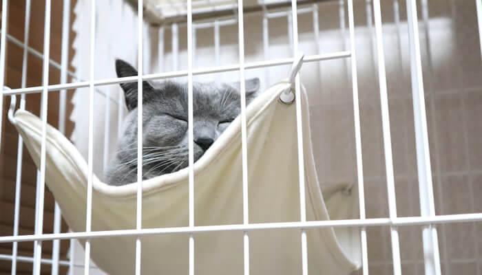 ケージのハンモックで寝る猫