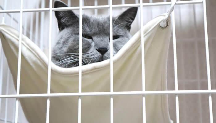 ケージのハンモックで眠たくなる猫
