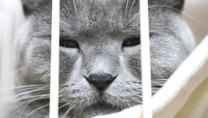 ケージのハンモックで眠たくなるドアップ写真の猫
