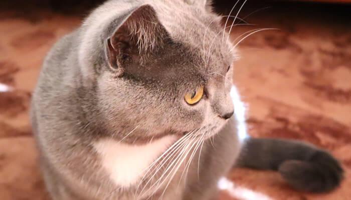 3COINS(スリーコインズ)の猫皿の事故に驚く猫