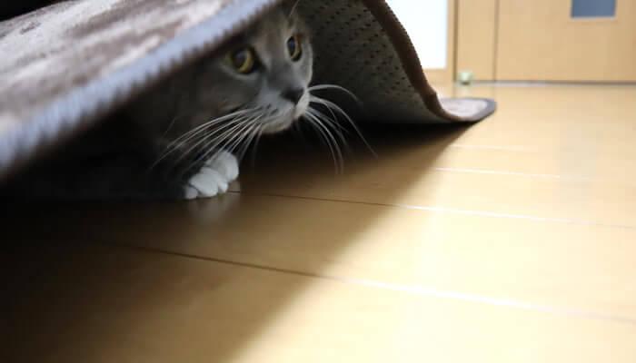 カーペットの下にもぐる猫