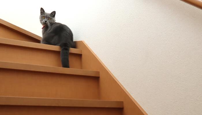 階段で待ち伏せをする猫のモモ