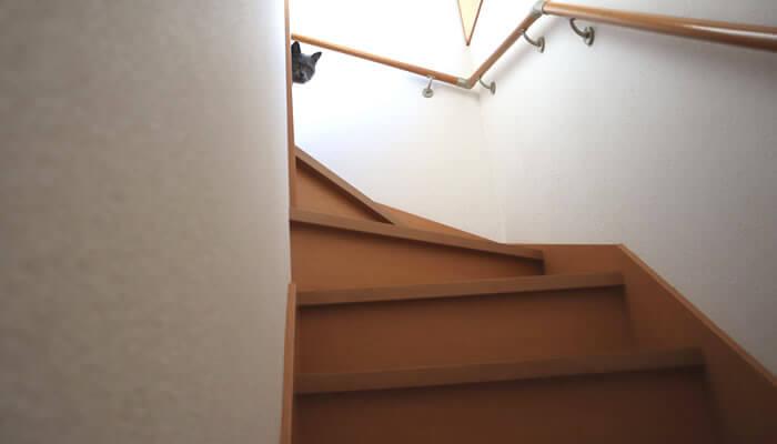 2階の廊下から覗く猫のモモ