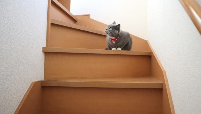階段で座ってくつろぐ猫のモモ