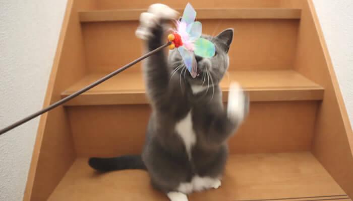 階段でカシャぶん遊びで運動不足を解消する猫のモモ