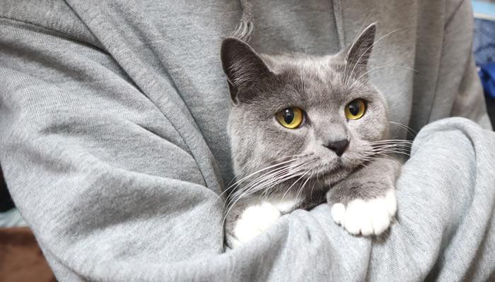 抱っこされて固まる猫のモモ
