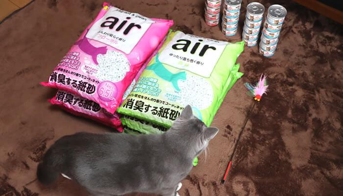 楽天セールで購入したペット用品を狙う猫のモモ