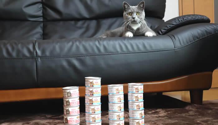 ヒルズのサイエンスダイエットの缶詰と猫のモモ