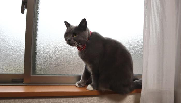ニャルソックしたいけど外が見えなくて困る猫のモモ