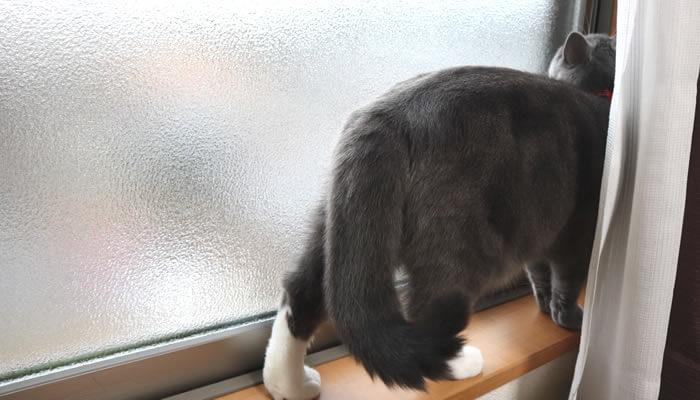 窓を開けてほしい猫のモモ