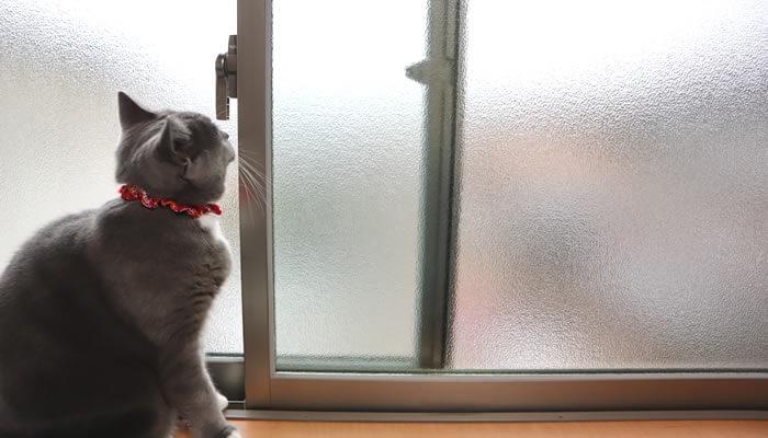 窓が開いたことに気付かない猫のモモ
