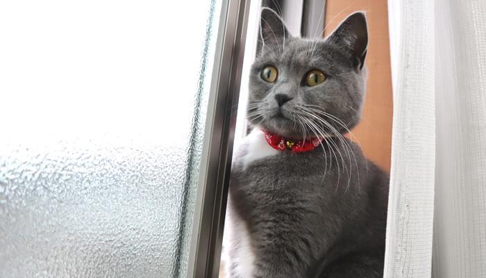 ニャルソックをしたい猫のモモと寒くて窓を閉めた飼い主