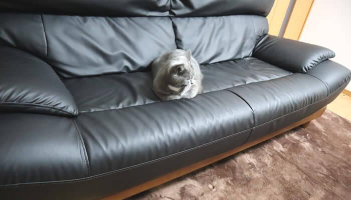 ソファーを占領する猫のモモ