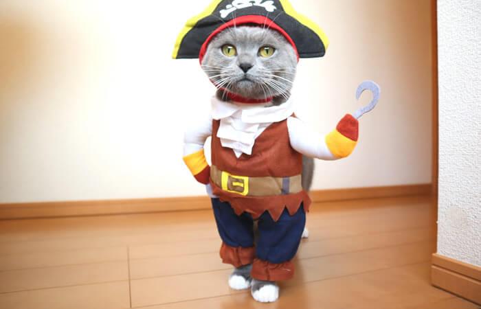 海賊のコスプレ衣装を着る猫のモモ