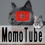 猫のモモ-動画-モモチューブ
