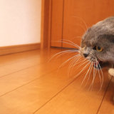 猫のぬいぐるみにキレるモモ