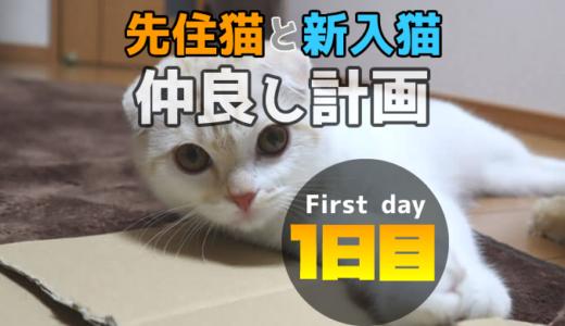 【多頭飼い1日目】先住猫と新入り猫が仲良くなるまでの期間はどれぐらい?