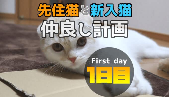 新入り猫レオ我が家に来て1日目