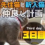 新入り猫レオ我が家に来て3日目