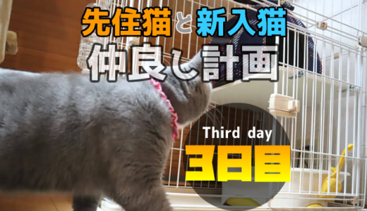 【多頭飼い3日目】先住猫と新入り猫の隔離部屋を交換して威嚇モード