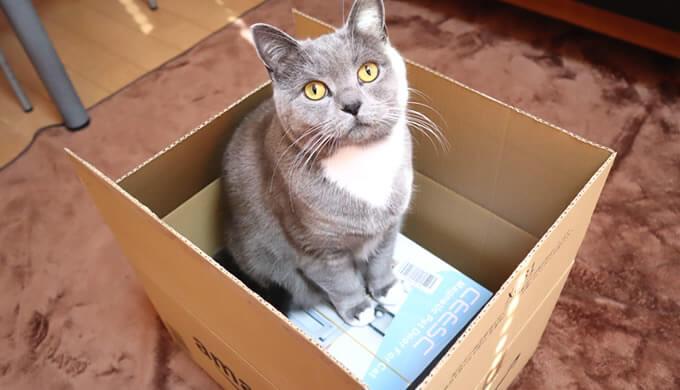 猫ドア(キャットドア)制作のグッズが到着