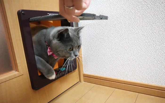 猫ドアのサイズはLサイズがおすすめ