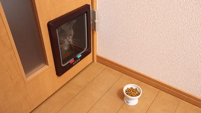 猫ドア通らない時の対策でご飯を使う