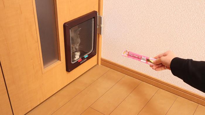 猫ドア通らない時の対策でちゅーるを使う