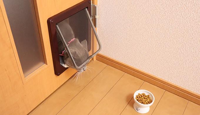 キャットドアを猫が通らない時の対策