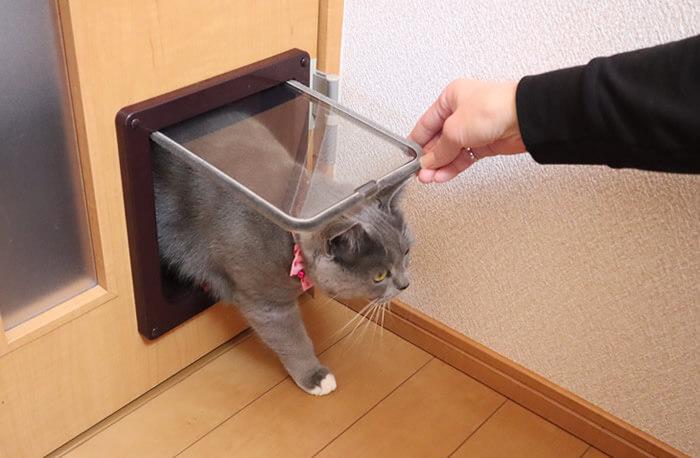 猫ドアを初めて通る猫のモモ