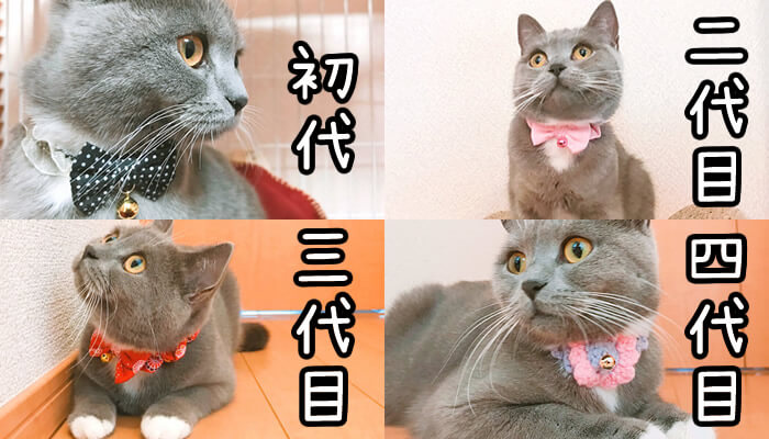 猫のモモの歴代の首輪