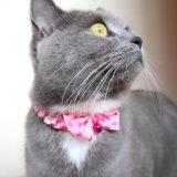 新しいハートの首輪を付ける猫のモモ