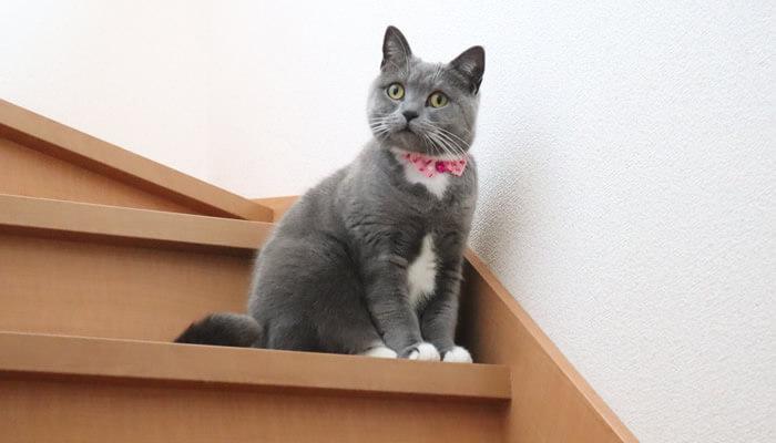 1階にいる新入り猫レオの様子が気になる先住猫のモモ