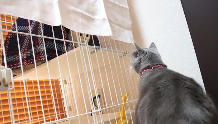 先住猫と新入り猫が目を合わせ硬直状態
