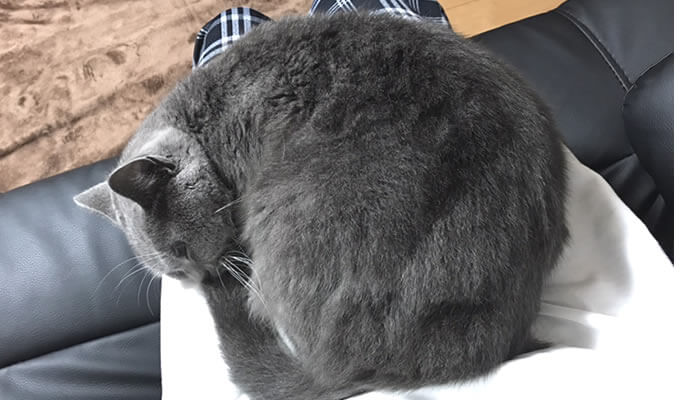 猫のモモが膝の上に乗ってリラックス
