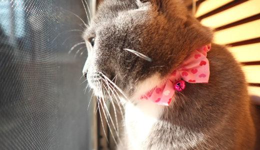 天気の良い日は自宅警備猫がニャルソック!