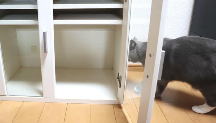 棚掃除の邪魔をしにくる猫のモモ