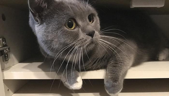 狭い棚の中に入る猫のモモ