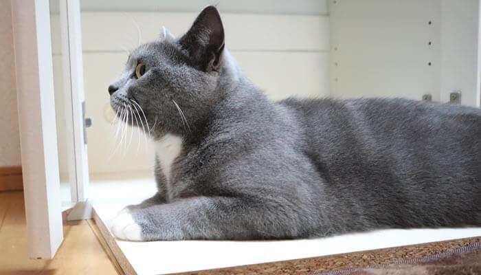 棚の前でくつろぐ猫のモモ
