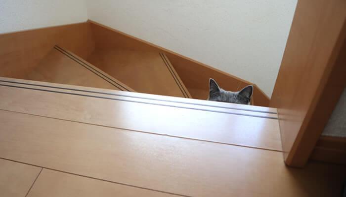 階段から2階の様子を覗く猫のモモ