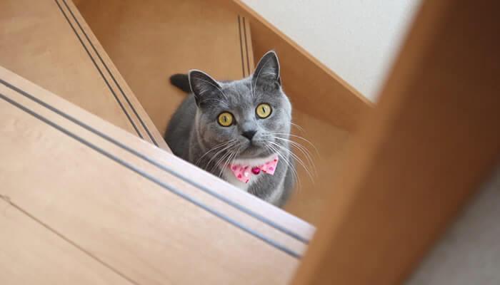 2階に行くと付いてくる猫のモモ