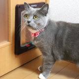 キャットドアと猫のモモ