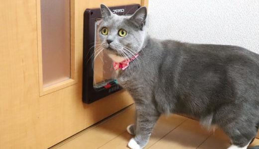 猫はペットドア取り付け工事(DIY)の音が怖い?