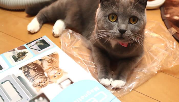 袋の上でキャットドアの取り付け作業を観察する猫のモモ