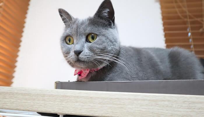 ケージの上からキャットドアの取り付け作業を見つめる猫のモモ
