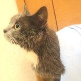 お風呂を嫌がらない猫のモモ