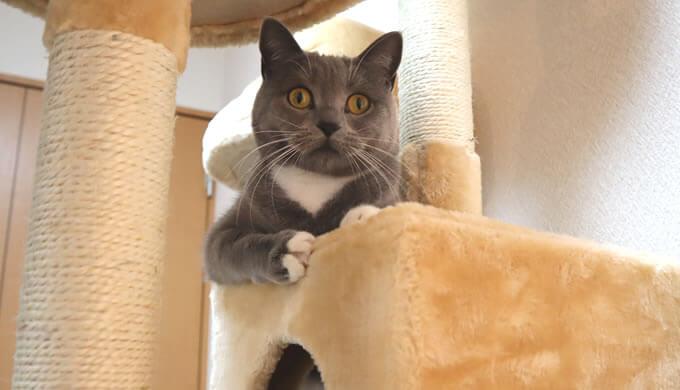 キャットタワーは猫に合わせたものを選ぼう