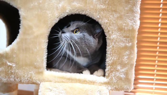 猫のモモが好きなキャットタワー